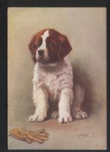 Tobacco insert Cigarette card postcard Saint Bernard  dog 1930's